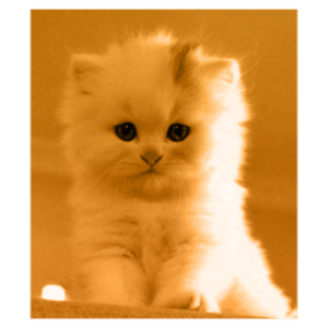 Small Kitty messages sticker-10