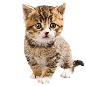 Small Kitty messages sticker-6