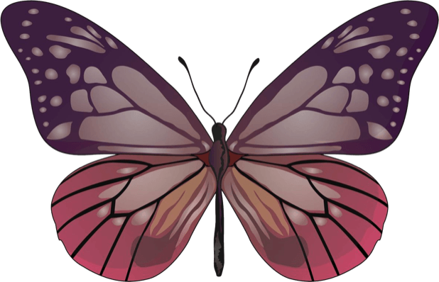 Beautiful Butterfly Sticker Pack messages sticker-5