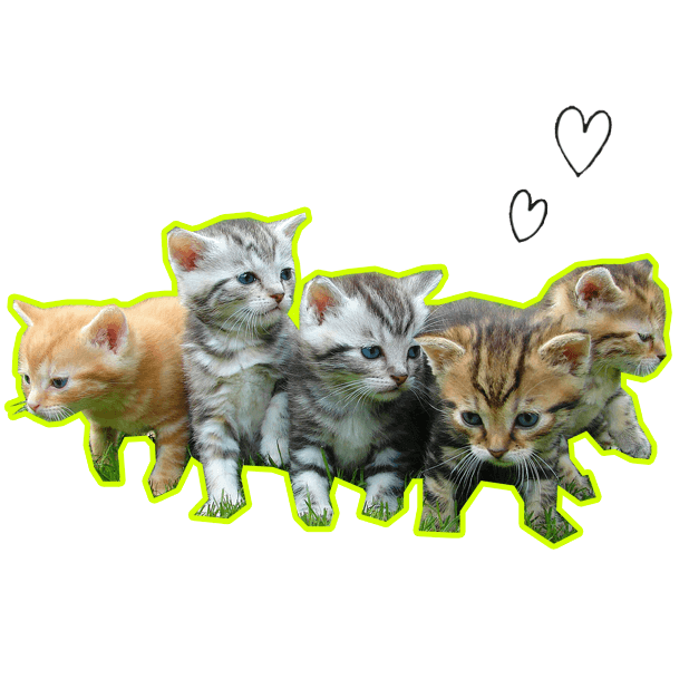 Let's Meow! - Cat Sticker Pack for Cat Lovers! messages sticker-8