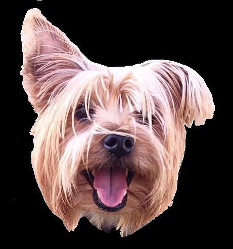 Dog Friends messages sticker-0