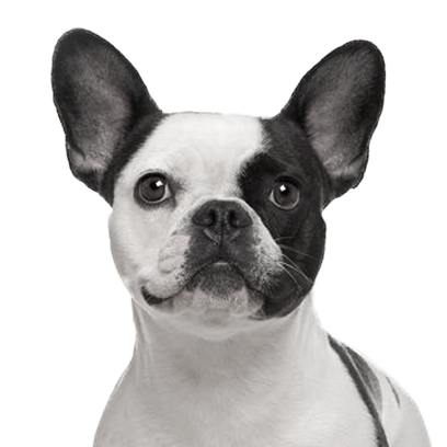 Frenchie Stickers - French Bulldog Pack messages sticker-9