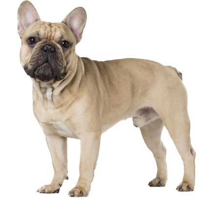 Frenchie Stickers - French Bulldog Pack messages sticker-10