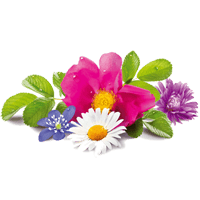 Flowers Stickers Pack FOr iMessage messages sticker-11