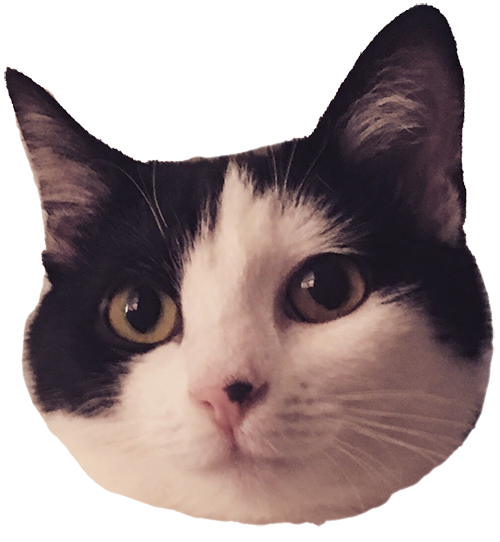 Muffin the cat messages sticker-0