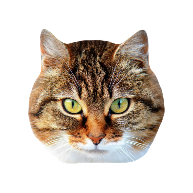 Cat Stickers for iMessage : Cats & Cat Heads messages sticker-11