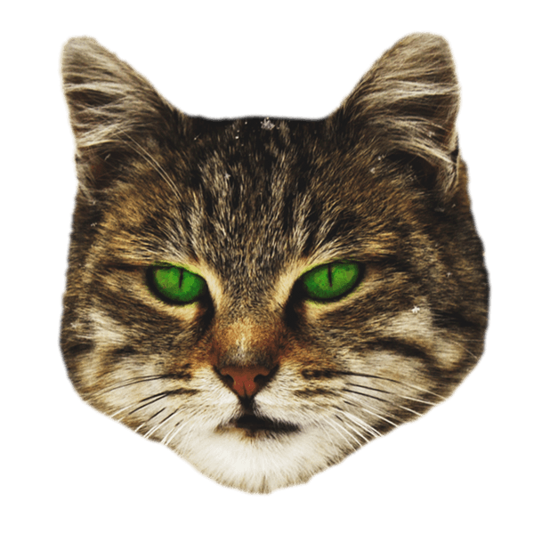 Cat Stickers for iMessage : Cats & Cat Heads messages sticker-8