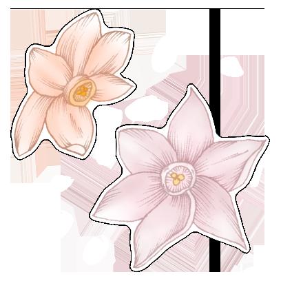 FlowerStickers messages sticker-2