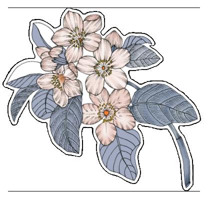 FlowerStickers messages sticker-6