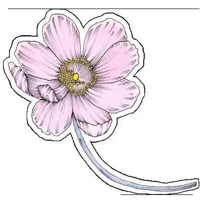 FlowerStickers messages sticker-0
