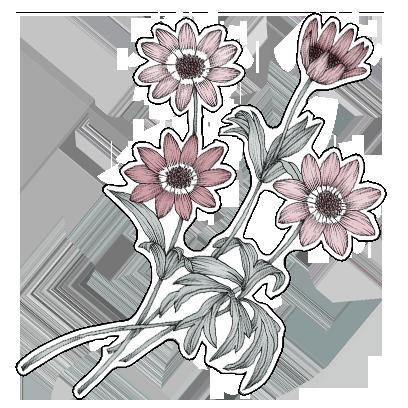 FlowerStickers messages sticker-9