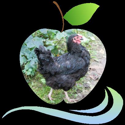Applecreek's Farm messages sticker-9