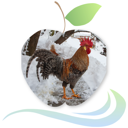 Applecreek's Farm messages sticker-10
