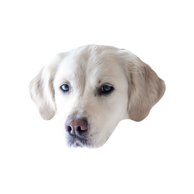 Dog Stickers (for iMessage) messages sticker-0