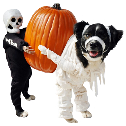 Halloween Dogs messages sticker-6