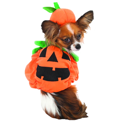 Halloween Dogs messages sticker-3