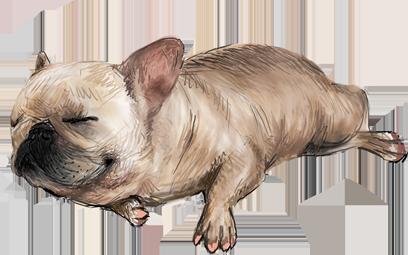 Dogue free pack messages sticker-1