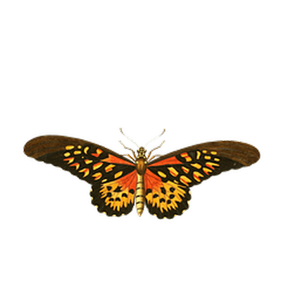 Butterflies Three messages sticker-6