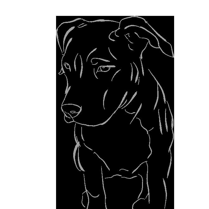 Dogs - A Mans Best Friend messages sticker-11