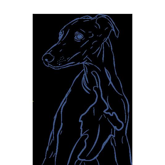 Dogs - A Mans Best Friend messages sticker-7