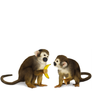 MonkeyStickerpack messages sticker-5