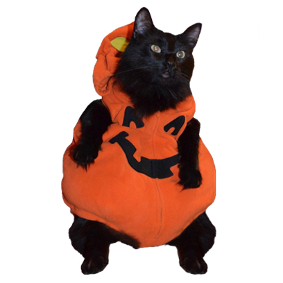 Halloween Cats messages sticker-6