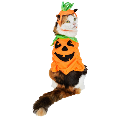 Halloween Cats messages sticker-10