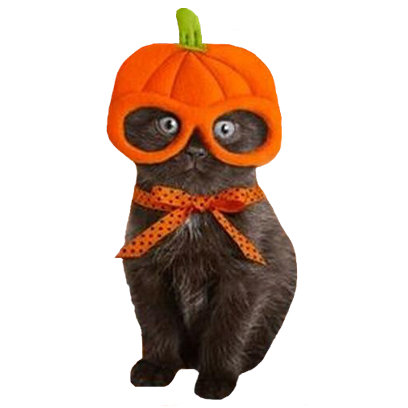 Halloween Cats messages sticker-0