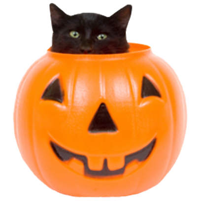 Halloween Cats messages sticker-4