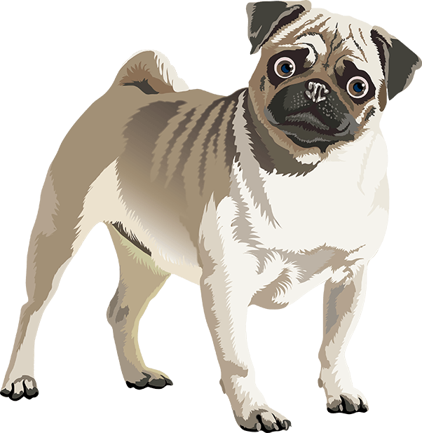 Realistic Dog Art - Dogs, Terrier, Black Lab, Pug messages sticker-4