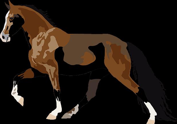 Realistic Horse Art - Horses, Arabian, Appaloosa messages sticker-11