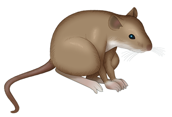 Of Mice messages sticker-0