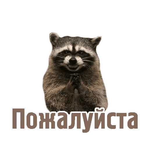 Комичные животные messages sticker-4
