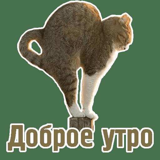 Комичные животные messages sticker-0