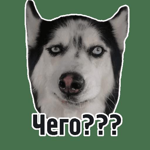 Комичные животные messages sticker-10