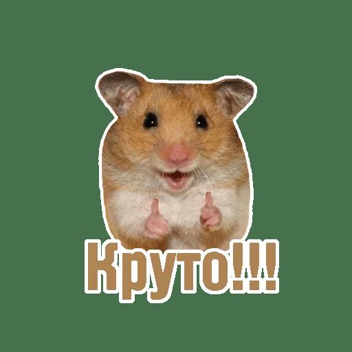 Комичные животные messages sticker-2