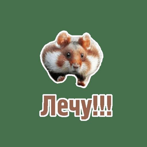 Комичные животные messages sticker-5