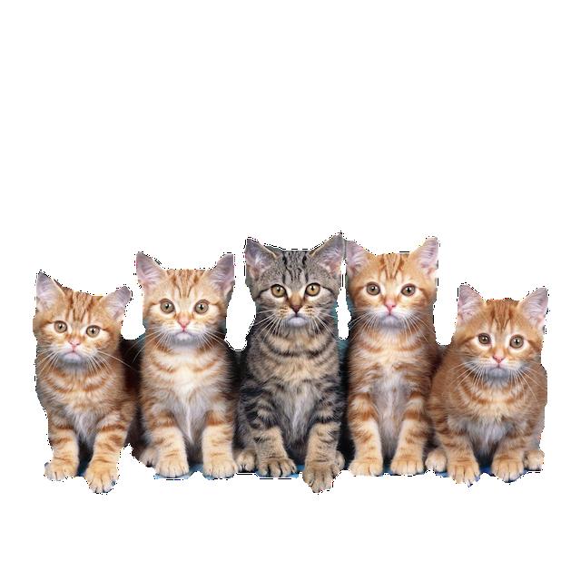 CatMoji-Kitty Emoji Keyboard and iMessage Stickers messages sticker-3