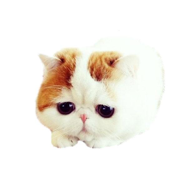 CatMoji-Kitty Emoji Keyboard and iMessage Stickers messages sticker-0