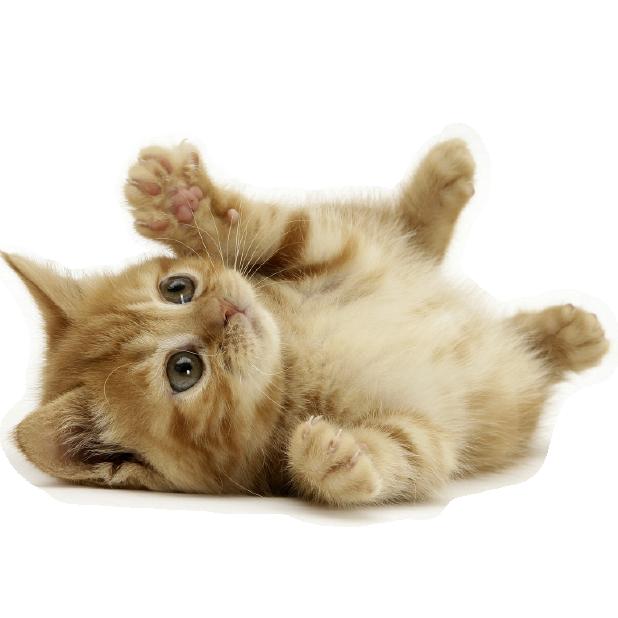 CatMoji-Kitty Emoji Keyboard and iMessage Stickers messages sticker-1