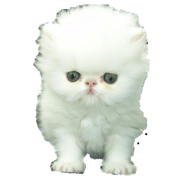 CatMoji-Kitty Emoji Keyboard and iMessage Stickers messages sticker-4