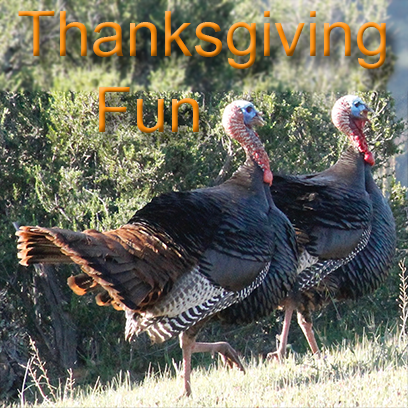 Turkeys messages sticker-2