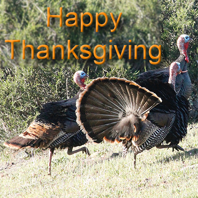 Turkeys messages sticker-0