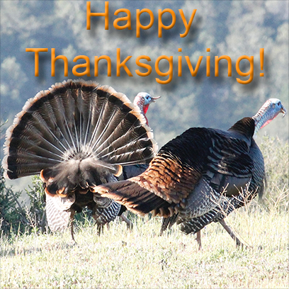 Turkeys messages sticker-1