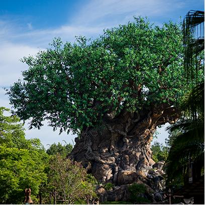 Daily Magic- Disney Photo Blog messages sticker-0