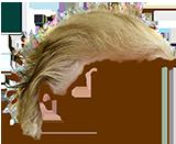 Trump Stamp messages sticker-3