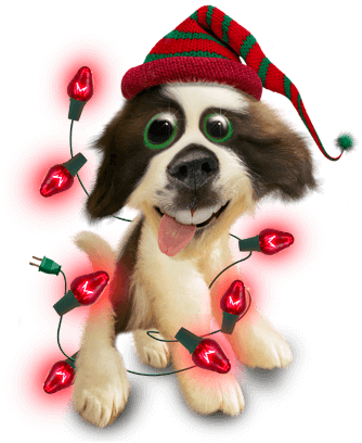 Twisted Whiskers Holiday messages sticker-4