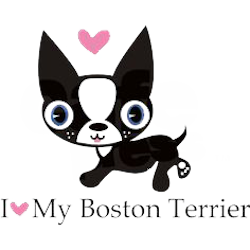 Boston Terrier Stickers messages sticker-0