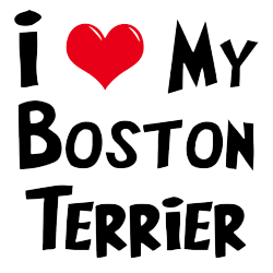 Boston Terrier Stickers messages sticker-5
