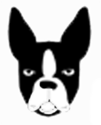 Boston Terrier Stickers messages sticker-2